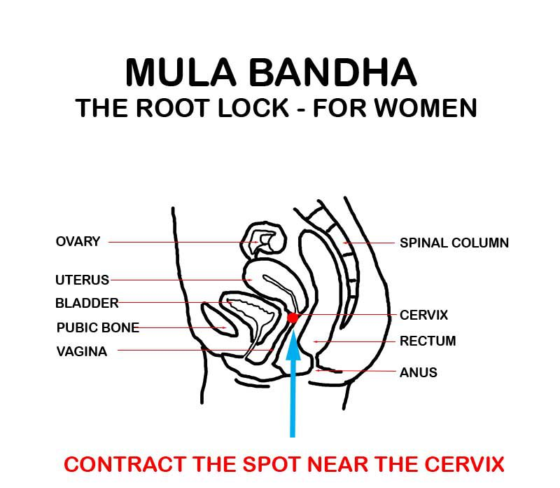 mula bhanda for women